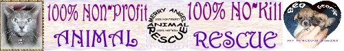 Merry Angel Animal Rescue